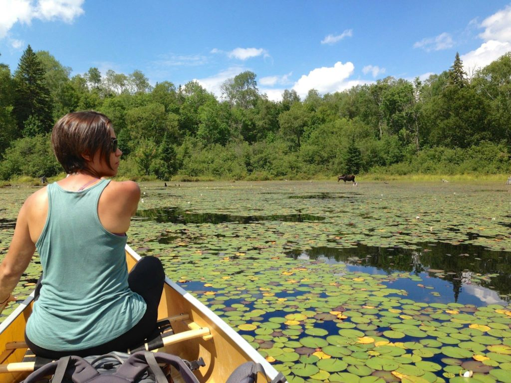 Algonquin Park Canoeing. Woman paddling a canoe on the left through a lake of lily pads.