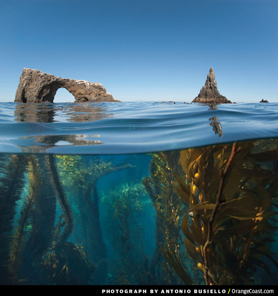 Channel Islands National Park, California. Image is a split of the bottom half looking under water seeing the plantation and the top half looking at a blue sky. Image is in full colour.