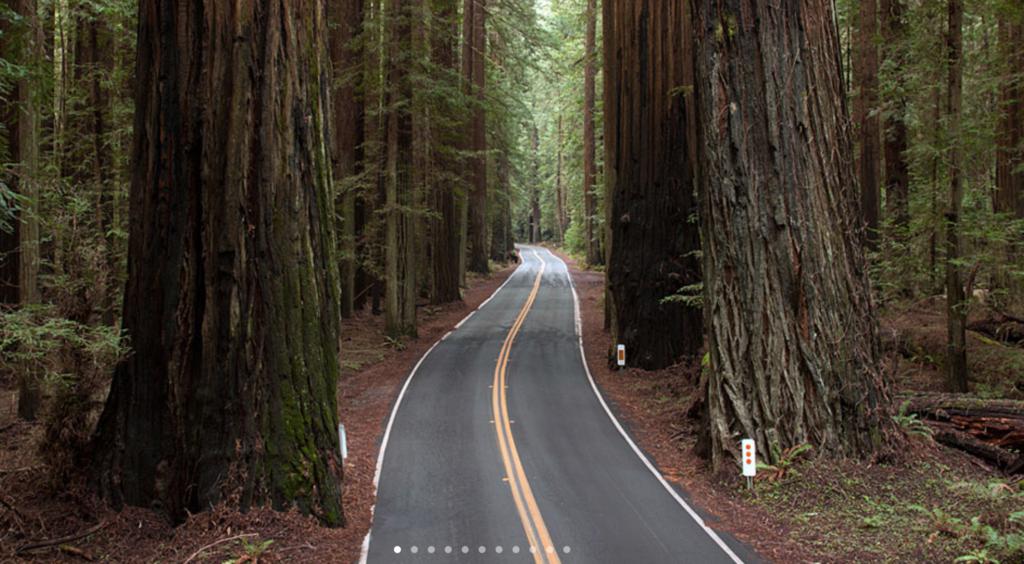 California Gigantic Redwood Trees.