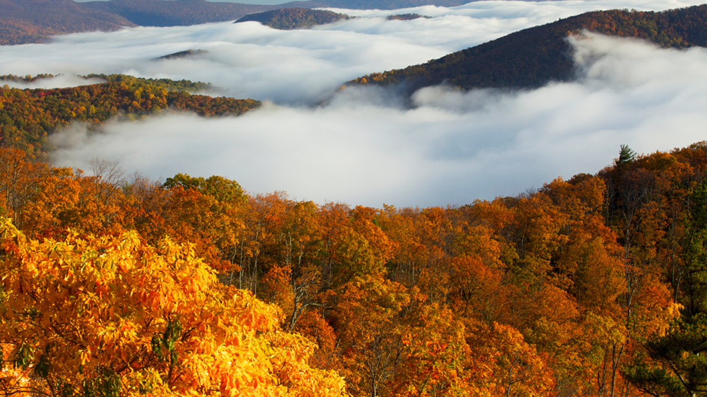 Mountains covered in trees in the fall with clouds resting on the top. Image is in full colour.