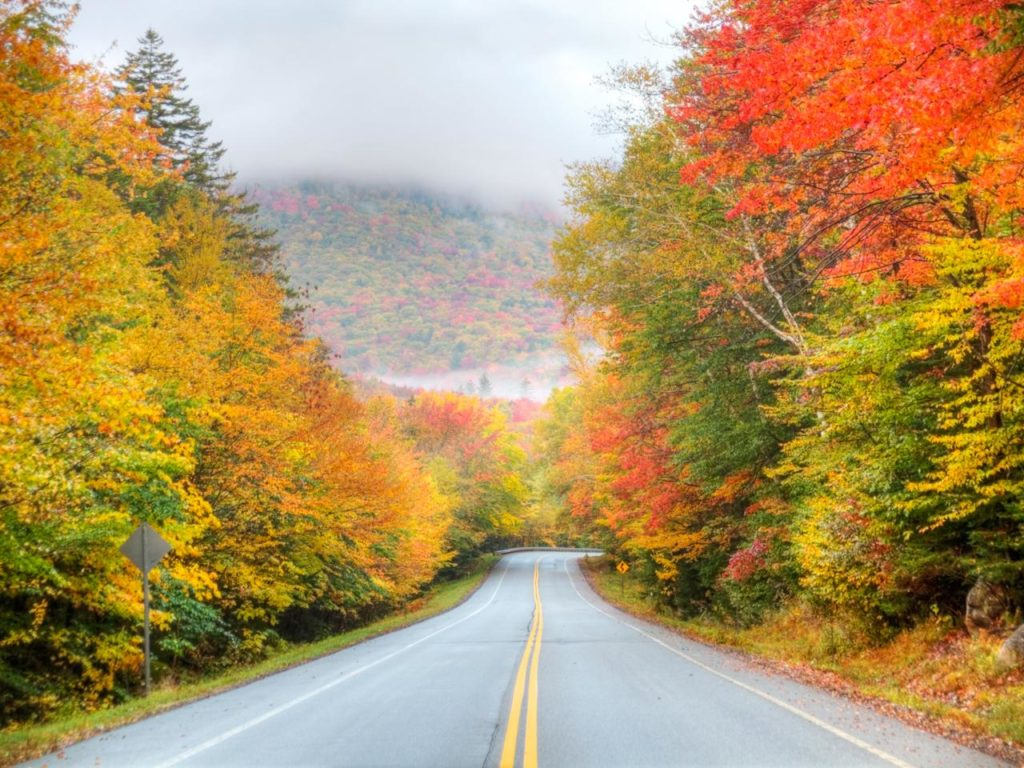 Roadway in the fall with colourful trees on both sides and white clouds in the background. Image is in full colour.
