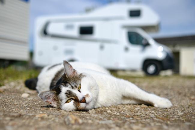 cats in rv, pet friendly rv