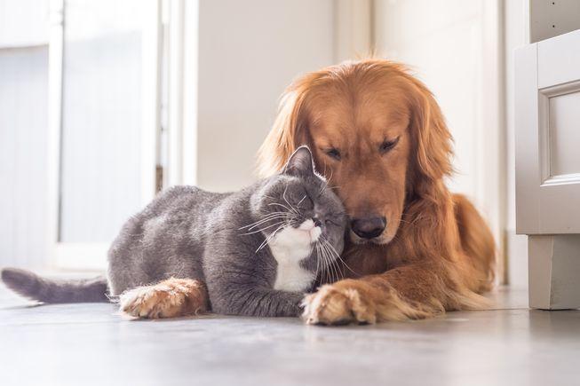 Pet friendly rv rental