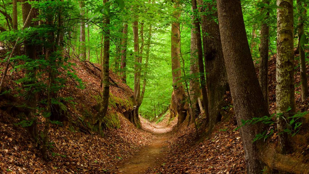 The Natchez Trace Walking Trail, Mississippi/Tennessee