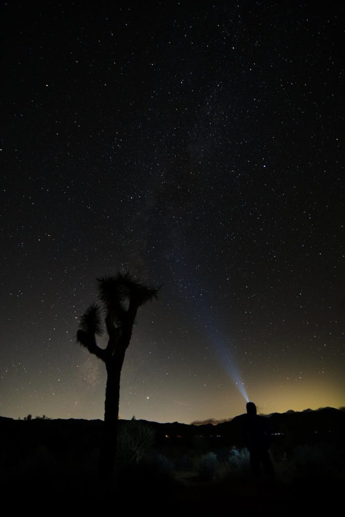 a Joshua tree in Joshua Tree National Park at night