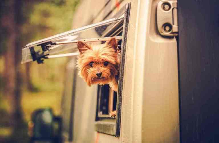 Pet Friendly RV